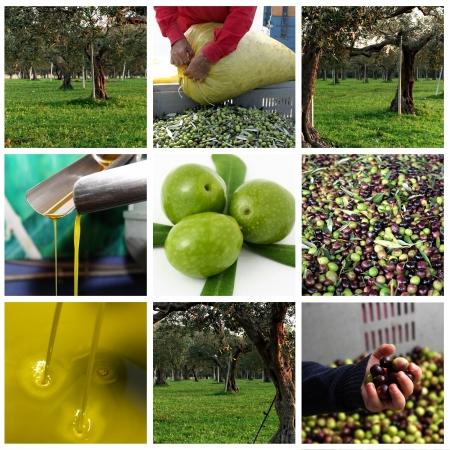 Verarbeitung von Oliven und Olivenöl Standard-Bild