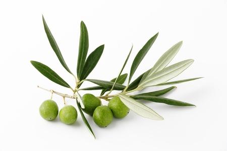 foglie ulivo: Olive verdi e ramoscelli