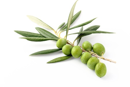 Olive green and twigs 2