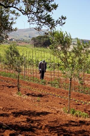 rurale: Agricoltura e agricoltore 3