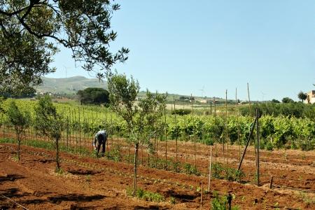 albero: Agricoltura e agricoltore 2
