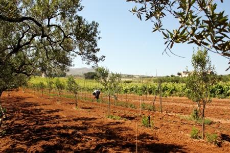rurale: Agricoltura e agricoltore Stock Photo