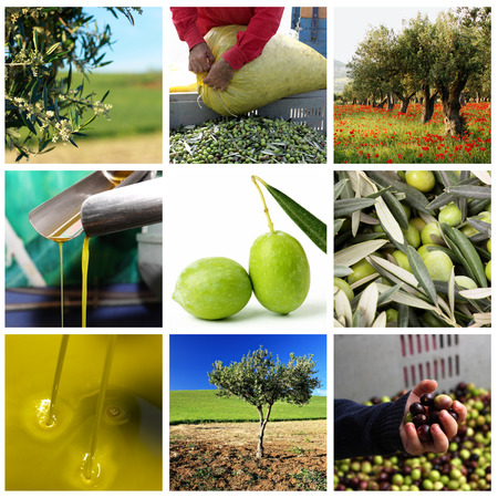 olive green: Processing of olives and olive oil 2