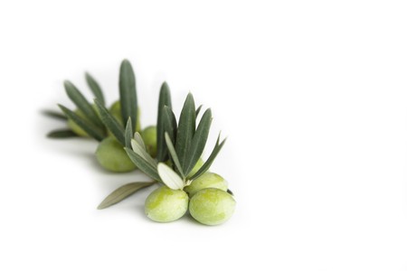 Olive branch and green olives