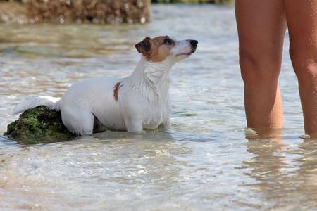 A dog takes a bath at the sea with his mistress Zdjęcie Seryjne