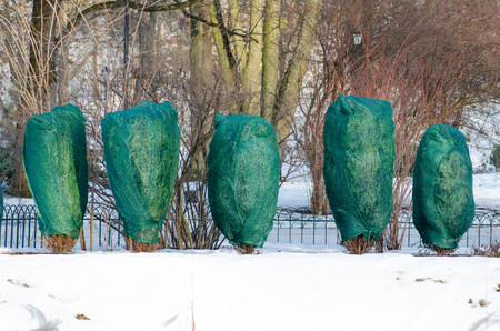 Dooi, sneeuw en ijs smelten, zon, licht en lente komen terug, planten en bomen in een park Stockfoto