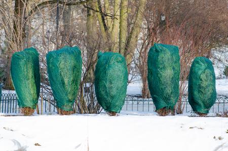 Odwilż, śnieg i lód topnieją, słońce, światło i wiosenny powrót, rośliny i drzewa w parku Zdjęcie Seryjne