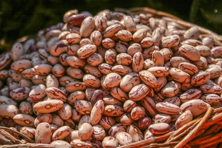 Dried Borlotti beans closeup, showing the red and white patterns of the beans