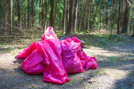 Collecting or picking up trash, garbage and plastic for cleaning in a forest, pollution