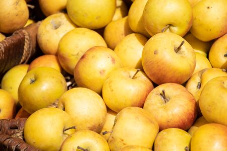 Fresh yellow apples in a farmer agricultural open air market, seasonal healthy food. Concept of biological, bio products, bio ecology, grown by yourself, vegetarians Stock Photo