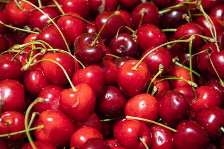 Fresh cherries in a farmer agricultural open air market, seasonal healthy food. Concept of biological, bio products, bio ecology, grown by yourself, vegetarians