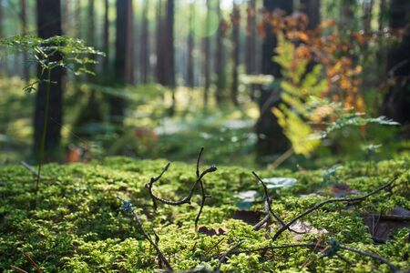 Beautiful green moss on the floor with trees and fern, macro view, close up, nature Reklamní fotografie