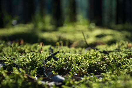 Beautiful bright green moss on the floor with trees, macro view, close up, nature Foto de archivo - 133571060