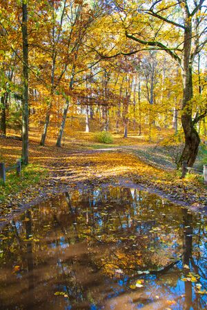 Wonderful autumn landscape with beautiful yellow trees and reflections in a puddle, vertical
