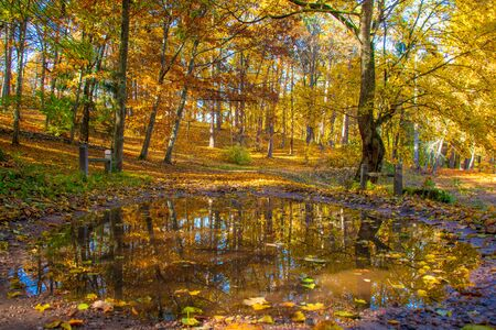 Wonderful autumn landscape with beautiful yellow and orange colored trees and reflections in a puddle Stok Fotoğraf