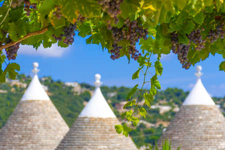 Group of beautiful Trulli, traditional Apulian dry stone hut old houses with a conical roof in Itria Valley, Puglia, Italy, with grapefruit tree