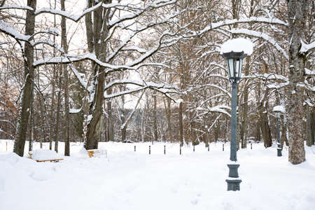Beautiful park in winter after snowfall with trees, old street lamps and benches covered by snow, winter landscape