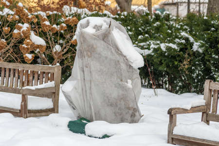 Plants and trees in a park or garden covered by the snow and blanket, swath of burlap, frost protection bags or roll of fabric to protect them from frost, freeze and cold temperature