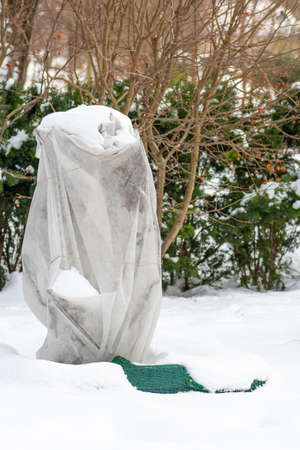 Plants and trees in a park or garden covered by the snow and blanket, swath of burlap, frost protection bags or roll of fabric to protect them from frost, freeze and cold temperature, vertical