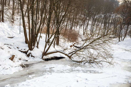 Frozen river in winter, snow and ice melting with fallen trunk of a tree, flowing stream, nature background