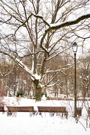 Beautiful park in winter after snowfall with trees, old street lamps and benches covered by snow, winter landscape, vertical Stock fotó