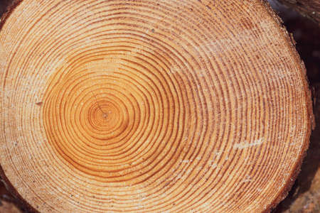 Large circular piece of wood cross section with trunk tree rings texture pattern and cracks, close up