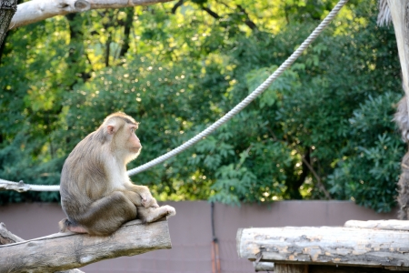 chimpances: Los chimpanc�s