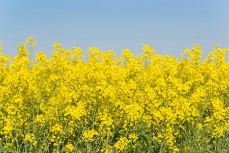 rurale: Field of wild flowers Stock Photo