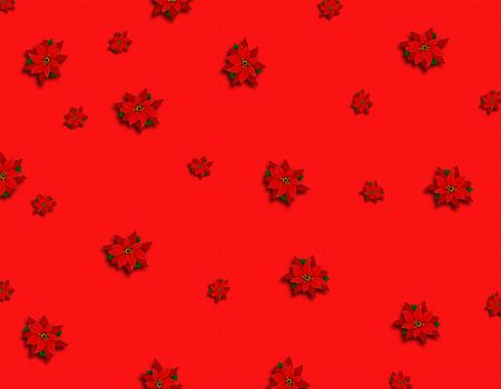 poinsetia background