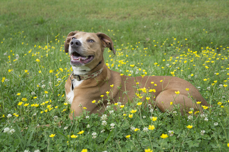 yeloow: Happy dog in grassy field with yellow and white flowers