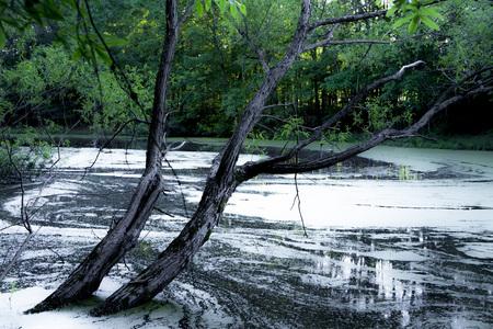 arboles frondosos: Paisaje de un árbol inclinado en el lago con árboles de hoja verde en el fondo Foto de archivo