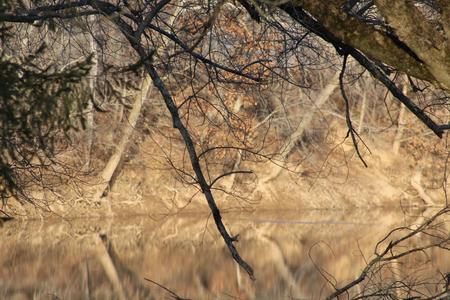 west virginia trees: West Virginia River