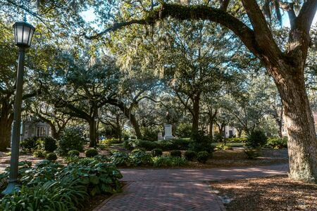 The live oaks is Savannah's favorite tree, ornamenting streets, parks and cemeteries across the city.