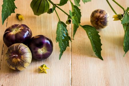 bounty: tomatillos púrpura Foto de archivo
