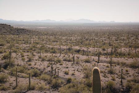 View of the desert landscape Banco de Imagens
