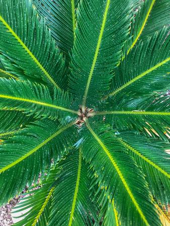 Top view of desert fern closeup Banco de Imagens