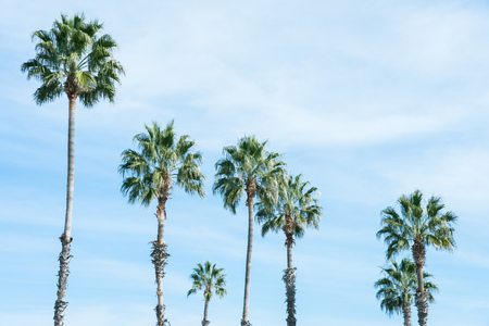 Palm trees against the blue sky background