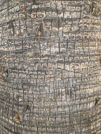 Close up of a palm tree trunk
