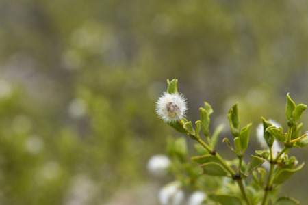 creosote: Creosote bush and seed