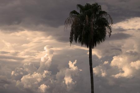 monsoon clouds: Monsoon sky with palm tree
