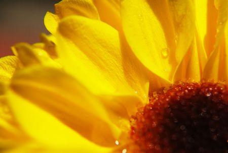 Yellow Flower close up photo