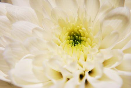 White Flower close up photo