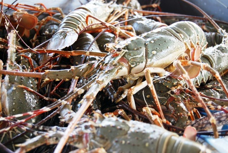 decapod: Fresh Lobster Prawn in the Market Place Stock Photo