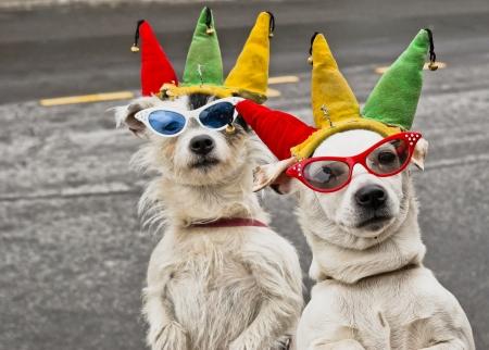 perros vestidos: Madre e hija equipo de perros de entretener turistas en un día de verano