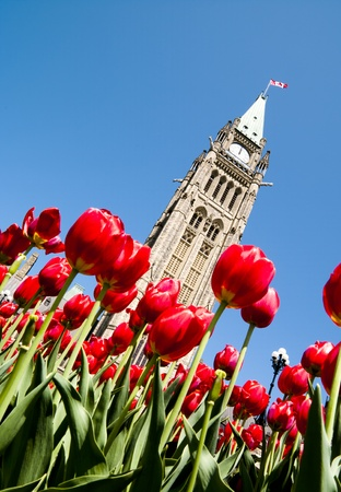 lunchtime: Low view of the Parliament Centre Block Peace Tower at an angle at lunchtime in spring with red tulips  Stock Photo