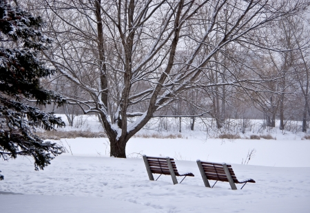 Two park benches covered with snow near a beautiful big tree in December  Stock Photo