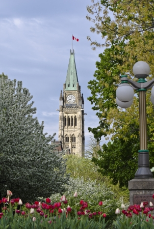 The Canadian Parliament Centre Block Tower at 8 am, with beautiful red and white tulips seen from Majors Hill park in Ottawa. Stock Photo