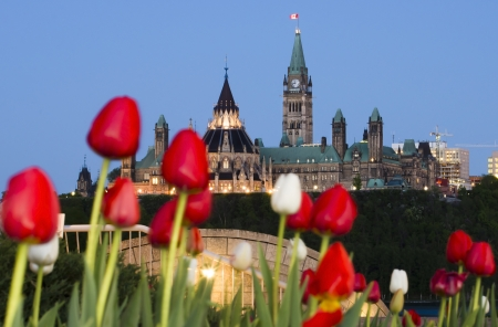 The Canadian Parliament Centre Block and Library seen from across the river in Gatineau with red and white tulips.