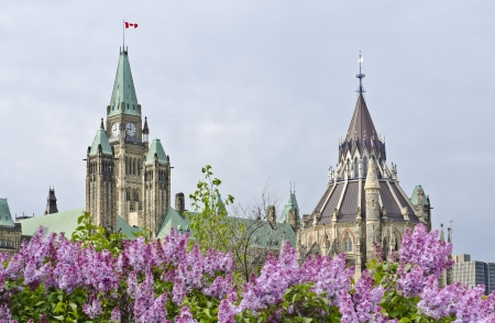 The Canadian Parliament Centre Block in spring seen from Majors Hill Park with beautiful purple lilacs.