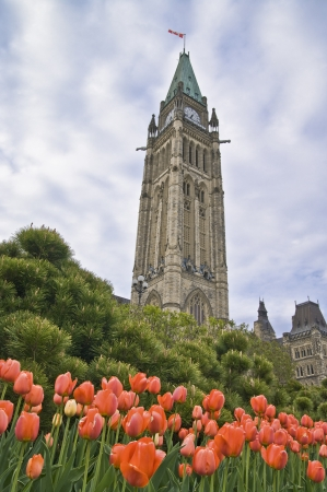 The Canadian Parliament Centre Block seen from below amidst orange tulips during the Spring Festival in Ottawa.